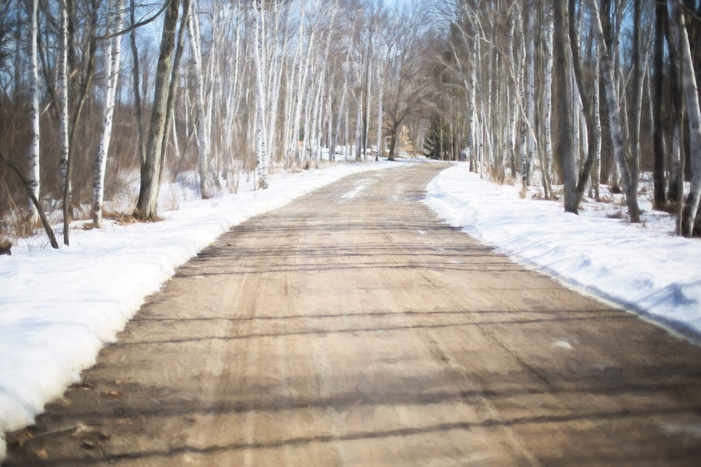 Vinterväg i sol med björkar vid vägkanterna.